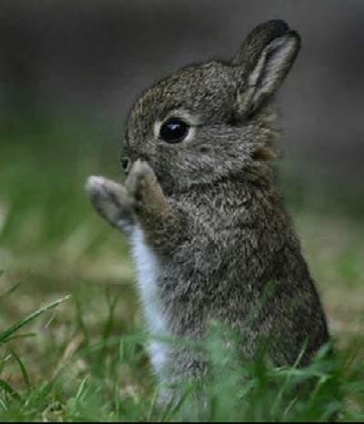 Cute Rabbit Caption
