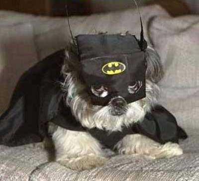 Batman Funny Dog Captions