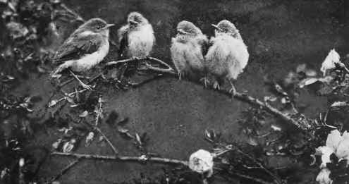 Bird Images